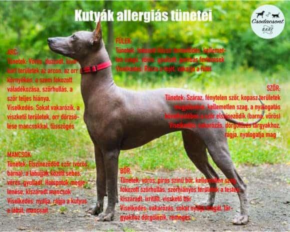 allergiaszezon