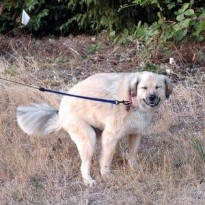 székrekedés kutyáknál