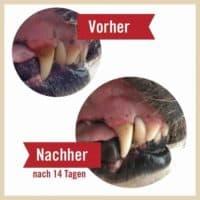 Leiky Dentanol – fogkő, fogínygyulladás és szájszag elleni por