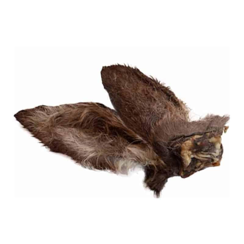 Szárított szőrös őzfül fülkagylóval, Teomann