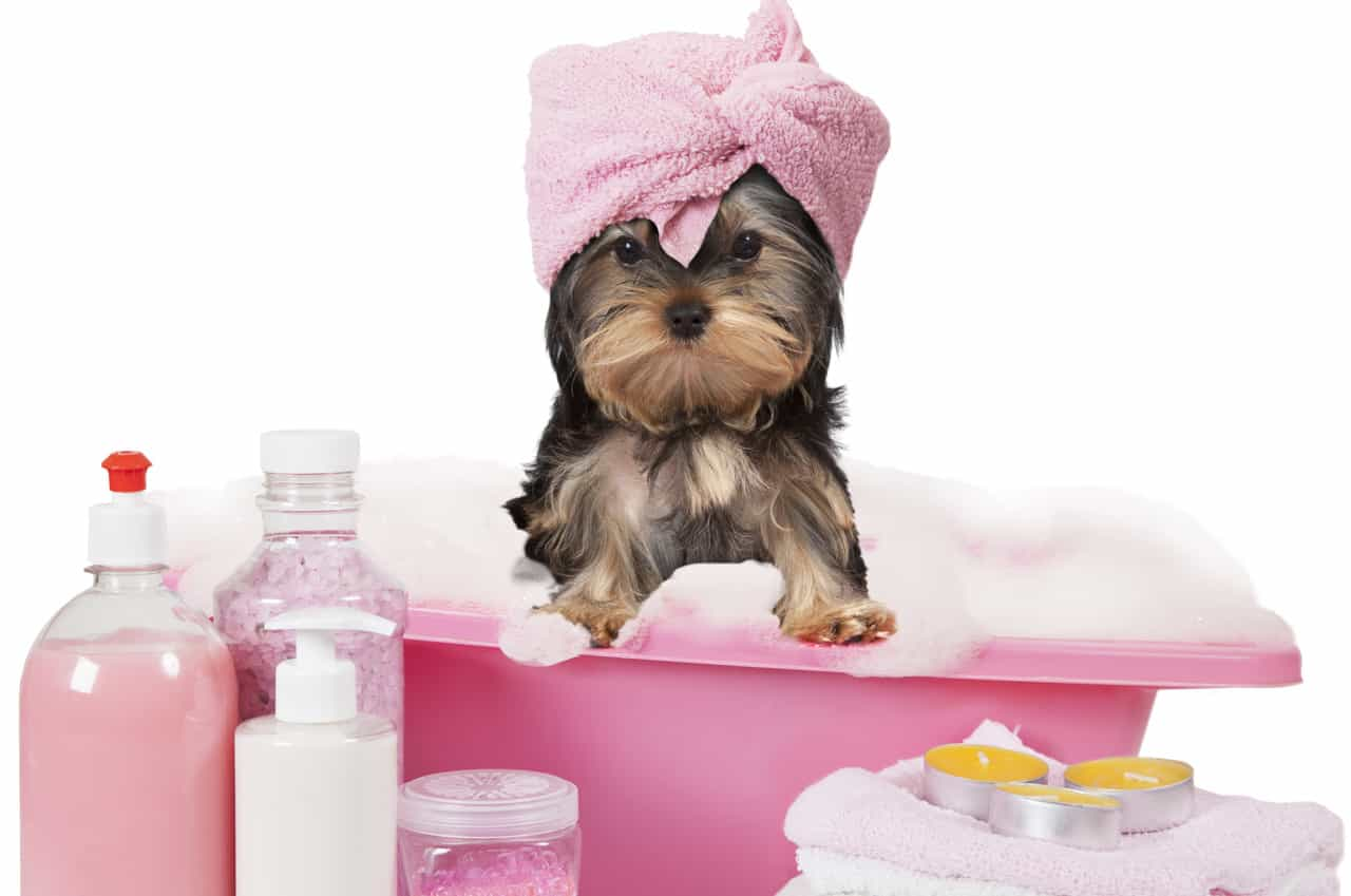 Kutyasamponok, szappanok