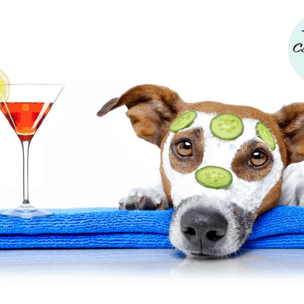 Kutya és macska ápolási felszerelések