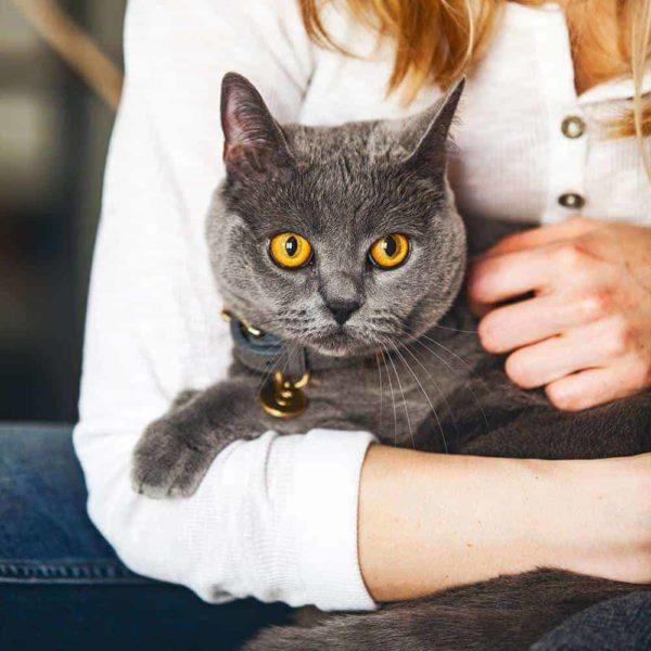 Szárított pulykamell macskának, Pet Farm Family