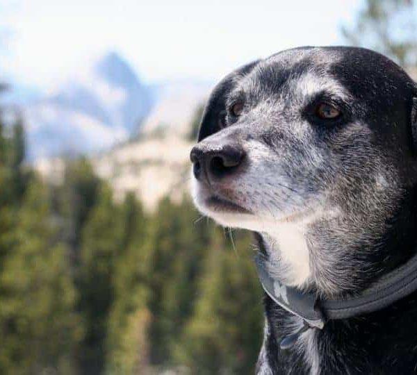 Idős kutyáknak