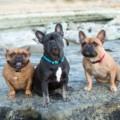 Lupine ECO újrahasznosított nyakörv kutyáknak – Pumpkin