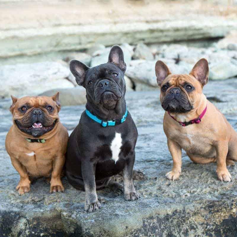 Lupine ECO újrahasznosított nyakörv kutyáknak – Tropical