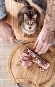 macska nyersetetés a legegészségesebb táplálék cicáknak